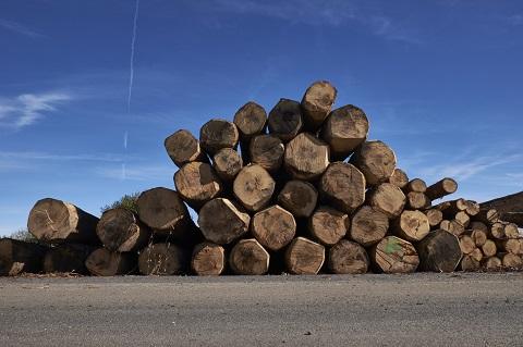 Qualité des bois sélectionnés