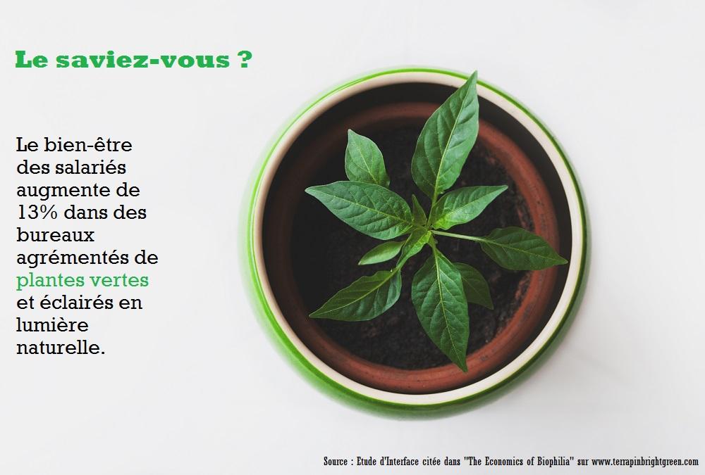 plante-verte-bureau-infographie